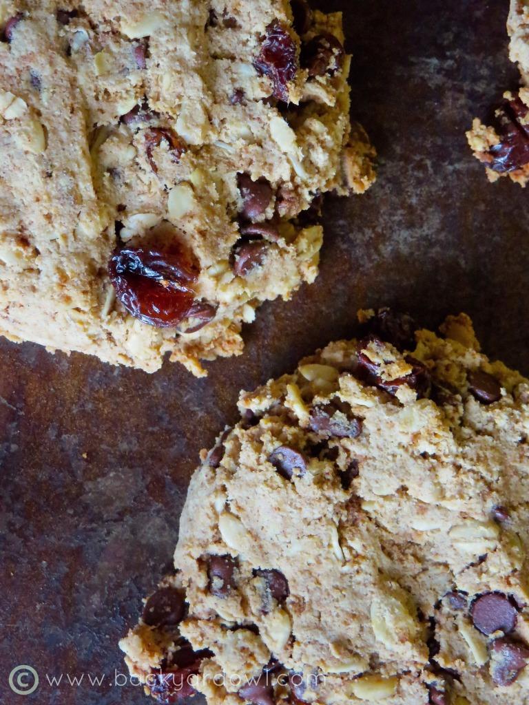 Chocolate Chip & Raisin Almond Pulp Cookies