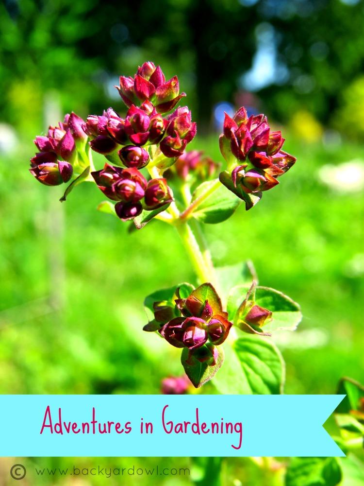 Adventures in Gardening: Crops in Pots
